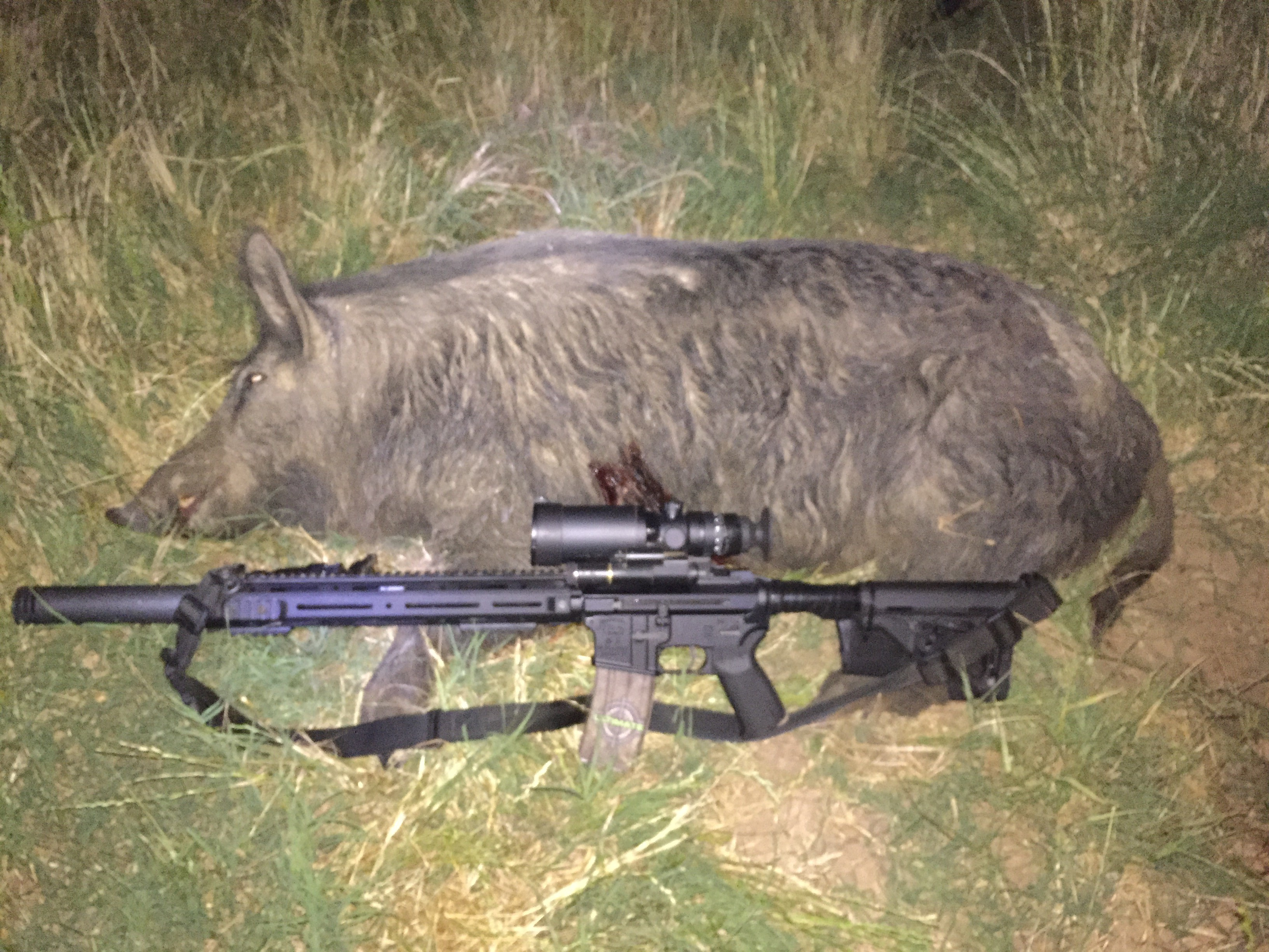 Hog hunting with the omega suppressor